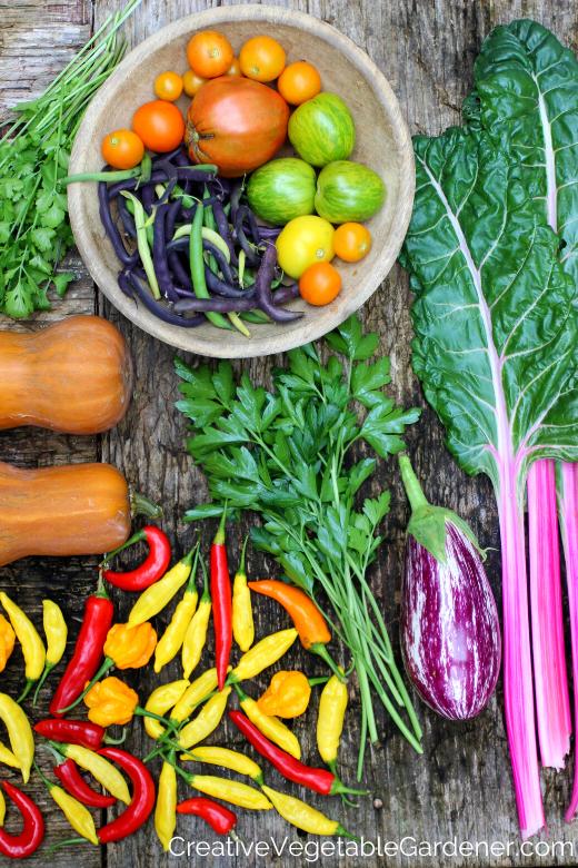 récolte de jardin coloré comme objectif de jardin