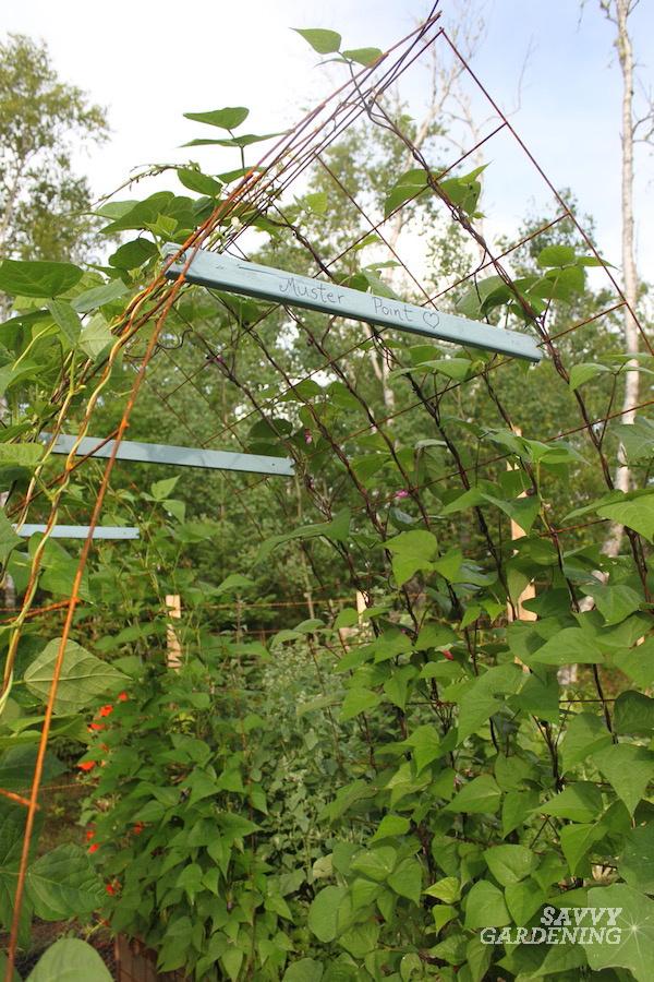 Comment construire une arche de haricots