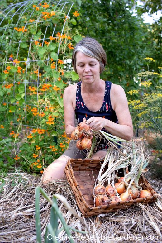 femme, récolte, oignons