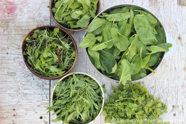 bols de légumes verts de la récolte du jardin