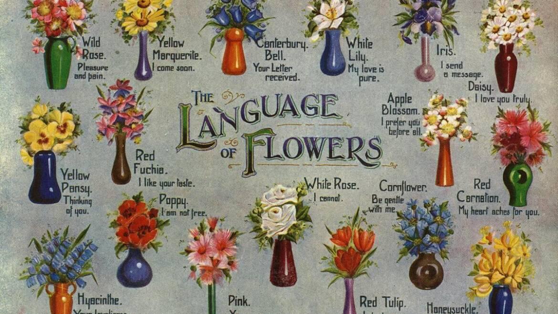 Signification des fleurs: symbolisme des fleurs, des herbes et d'autres plantes