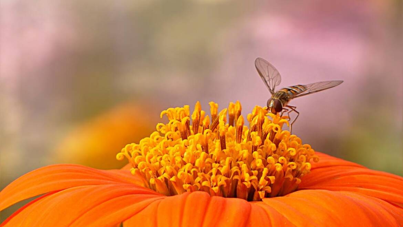 Planter un jardin de pollinisateurs: 10 façons de travailler avec la nature