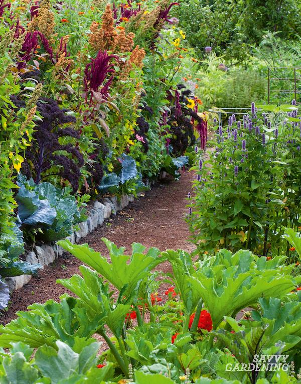 Jardin de polyculture avec différentes espèces