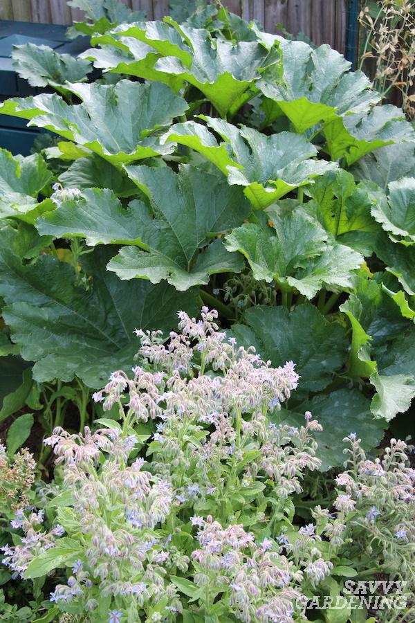 Les meilleures plantes compagnes de courgettes pour un jardinage réussi