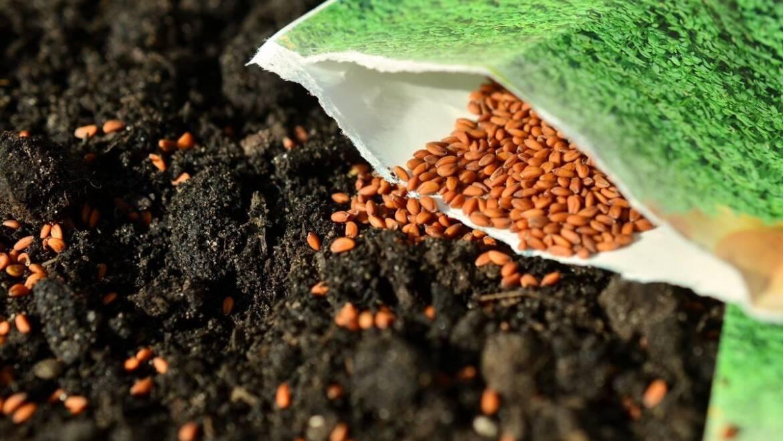 Semer des graines: comment semer des graines de légumes à l'extérieur
