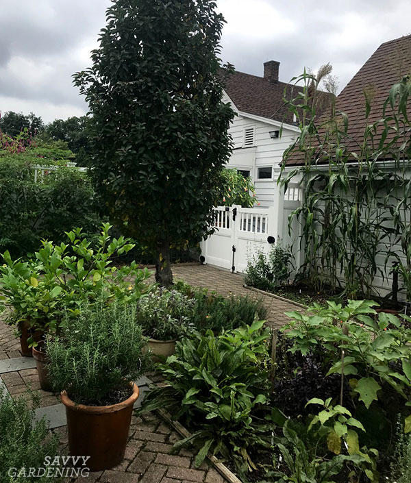 un jardin de légumes de la cour avant avec des contenants et du maïs