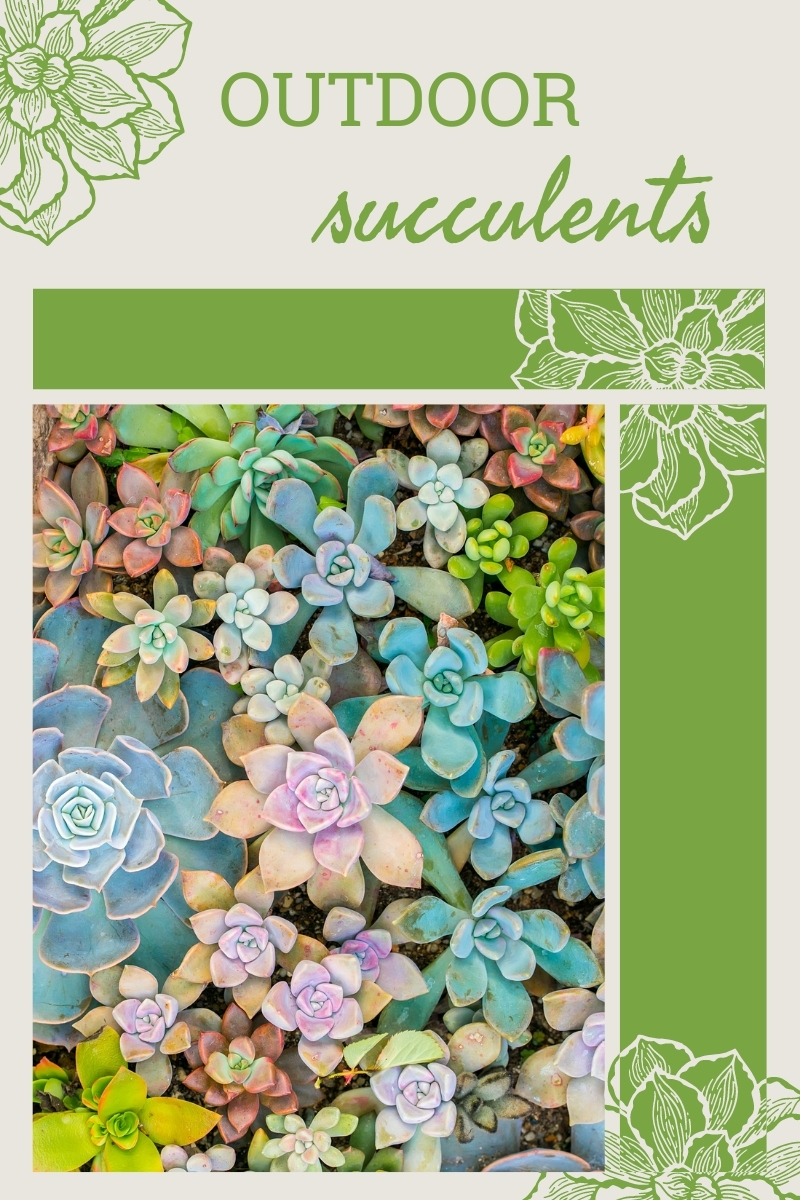 Explorer les plantes succulentes dans le paysage