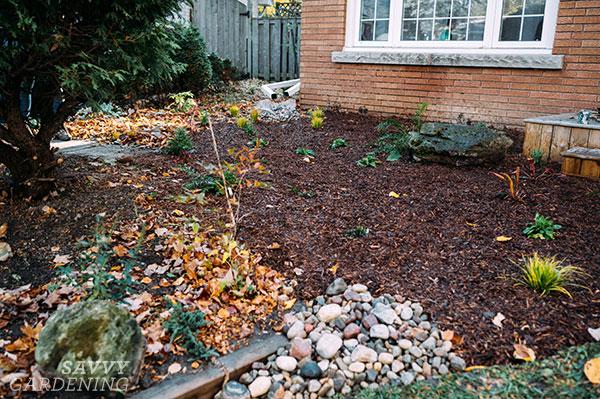 jardin de pluie nouvellement planté