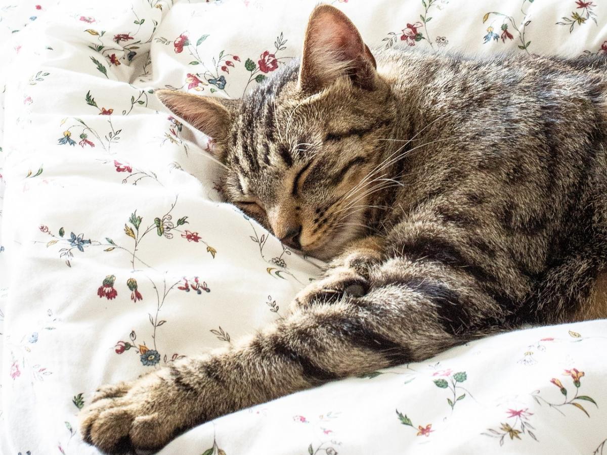 Sommeil: essentiel pour la santé;  la science approuve maintenant la sieste