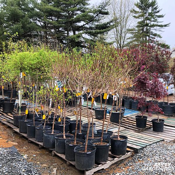 Apprenez le meilleur moment pour planter des arbres