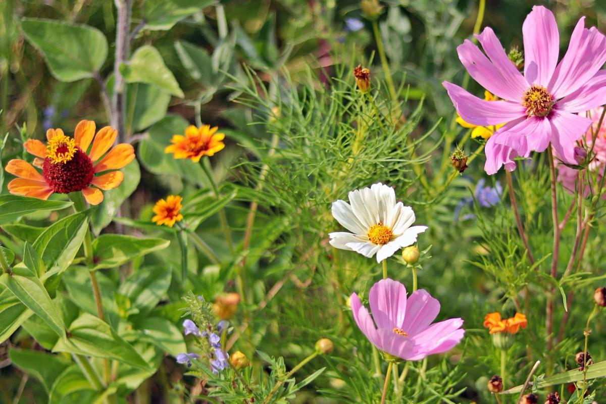 Quand planter des fleurs: Guide de plantation de plantes vivaces, annuelles et bulbes