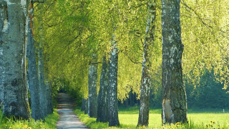 Souffler dans le vent: allergies et pollen
