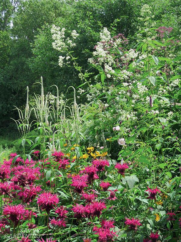 Une variété de fleurs pour nourrir une diversité de pollinisateurs