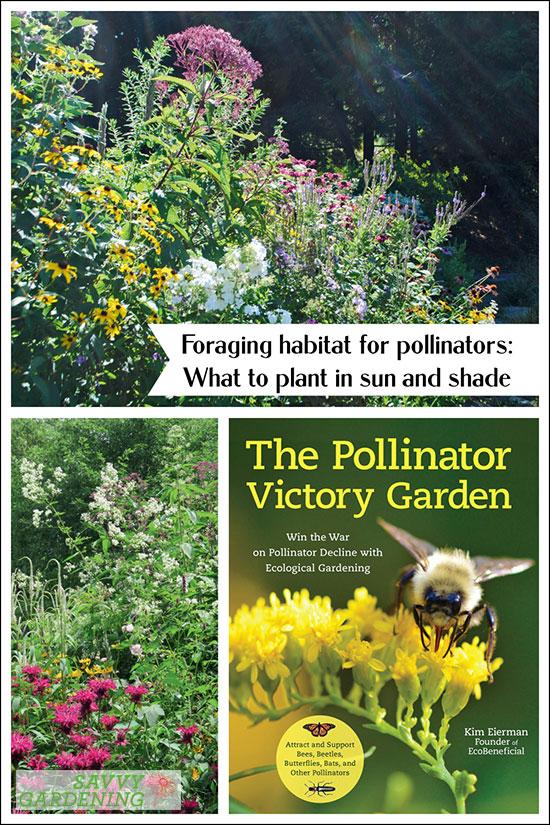 Planter un habitat d'alimentation pour les pollinisateurs dans les zones ensoleillées et ombragées