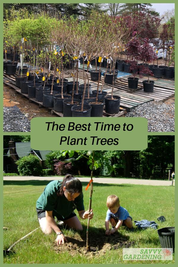 Le meilleur moment pour planter des arbres