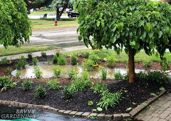 Un jardin pluvial après une tempête