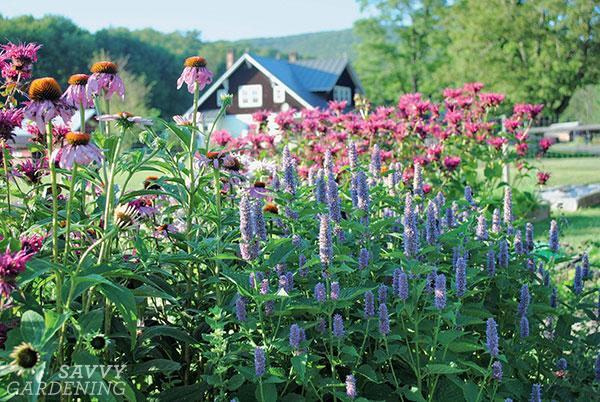 fournir un habitat d'alimentation pour les pollinisateurs dans un jardin ensoleillé