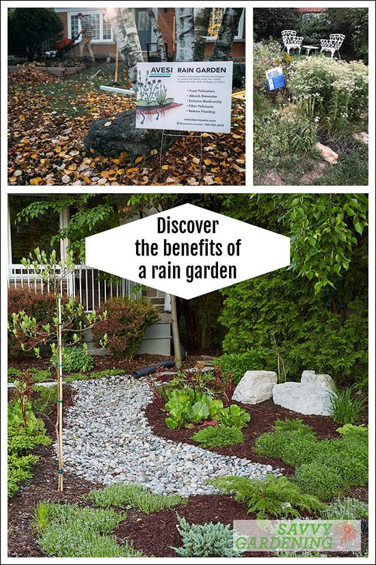 trucs et avantages pour le jardin pluvial