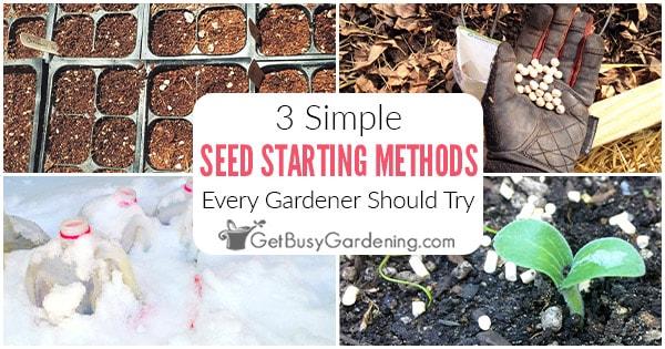 3 techniques faciles de semis et de germination des semences