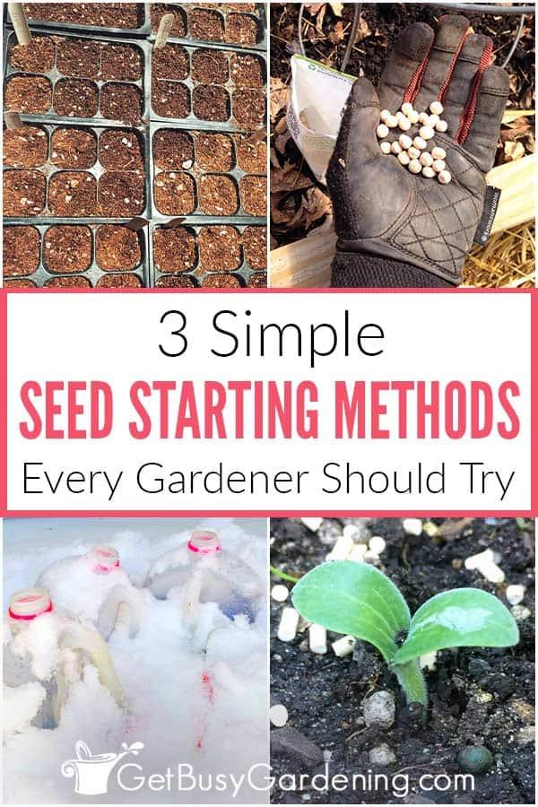 3 méthodes simples de démarrage des semences que chaque jardinier devrait essayer