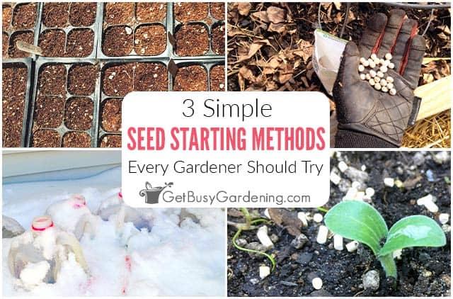 Méthodes de démarrage des semences que chaque jardinier devrait essayer