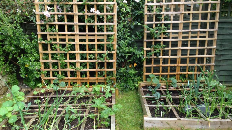 Planification d'un jardin de pieds carrés: avantages et inconvénients, exemples de plans