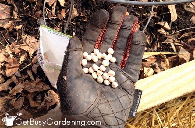 Commencer les graines avec la méthode de semis direct