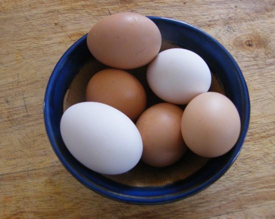 Utilisations de cellules d'œufs pour les coquilles d'œufs »wiki utile  Les jardins de Laurent du vieux fermier