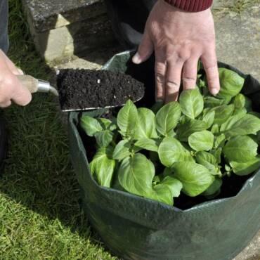 1618189138_grow-bag-shutterstock_572340613.jpg