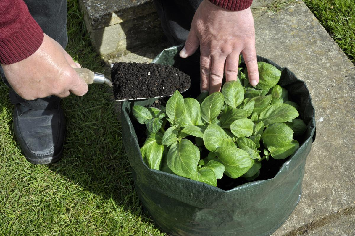 Découvrez les sacs de culture: un conteneur de plantes alternatif
