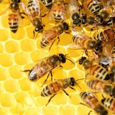 1618362242_honey-bees-honeycomb.jpg