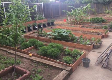 Avis sur Vegetable Garden Planner: Lisa M.