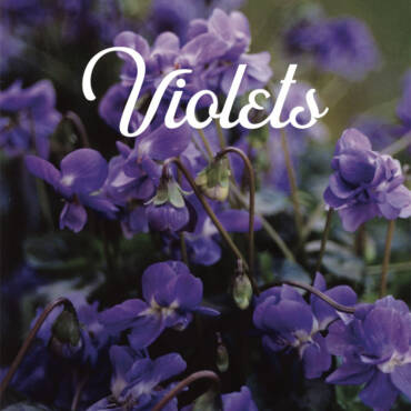 violettaaaa.jpg