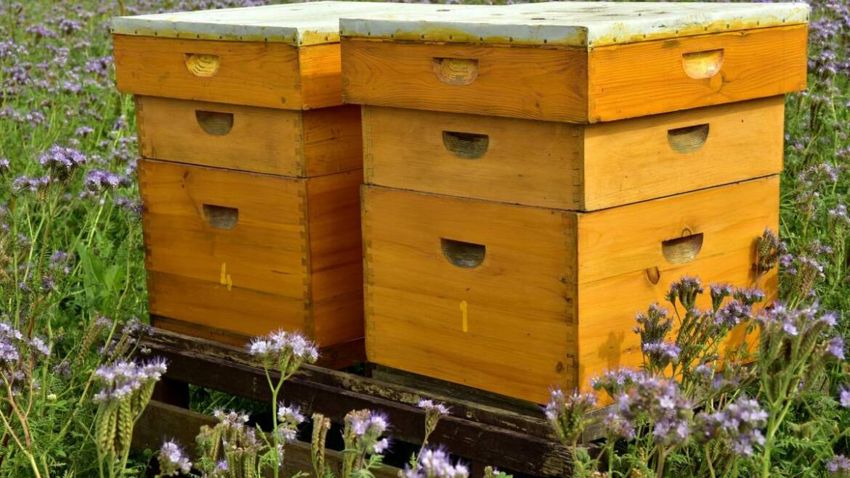 3 meilleurs types de ruches: Langstroth, Top Bar et Warré |  Apiculture 101