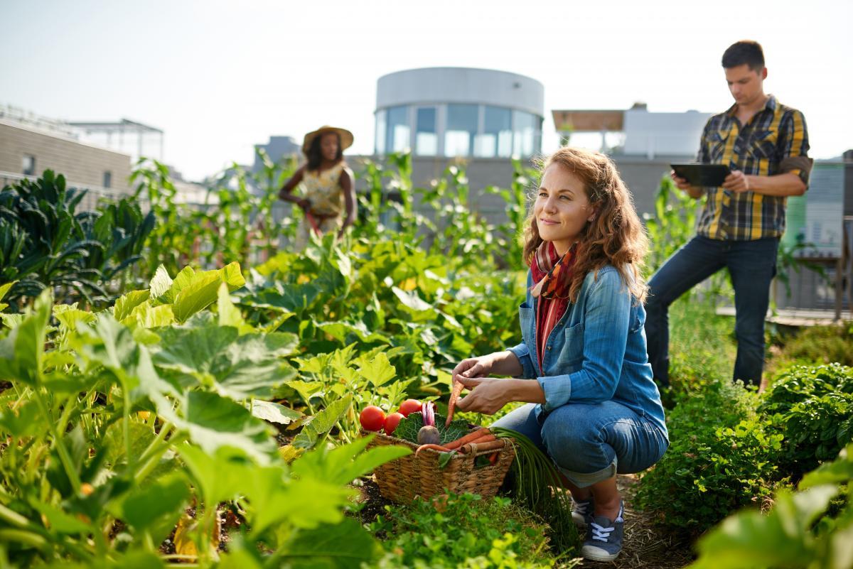 Pourquoi rejoindre (ou démarrer) un jardin communautaire?