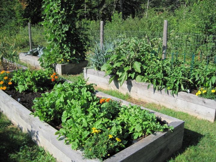 Les bases du jardinage biologique: comment démarrer un jardin biologique