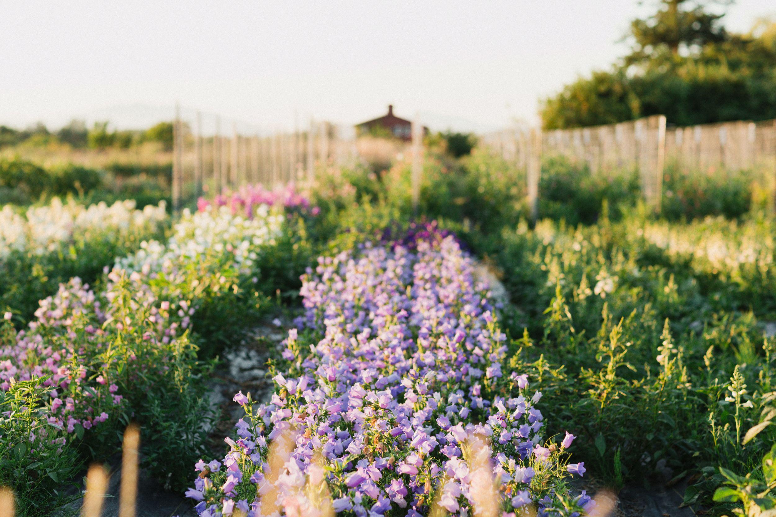 A la découverte des biennales – Floret Flowers