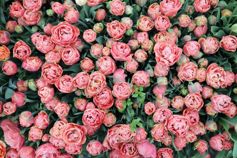 Trouvez des fleurs locales pour la fête des mères grâce au Collectif Floret Farmer-Fleuriste