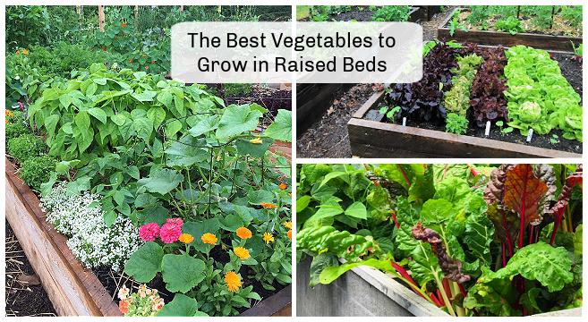 Les meilleurs légumes à cultiver dans des lits surélevés: 10 choix faciles à cultiver