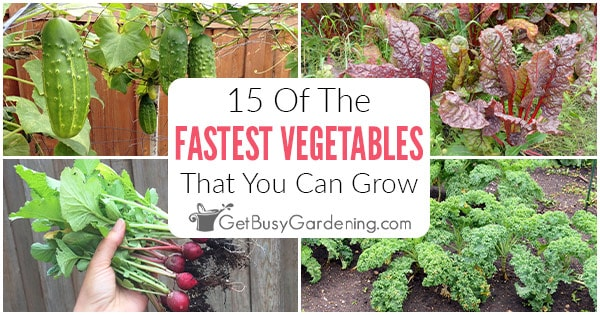 15 légumes à la croissance la plus rapide que vous pouvez planter dans votre jardin