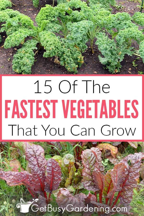 15 des légumes les plus rapides que vous puissiez cultiver
