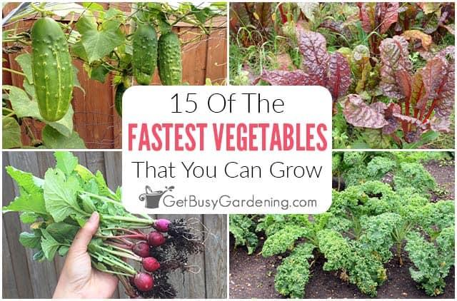 15 légumes à croissance rapide que vous devriez planter dans votre jardin