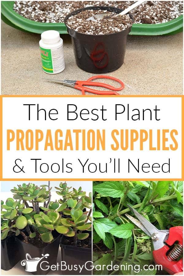 Les meilleurs fournitures et outils de multiplication végétale dont vous aurez besoin