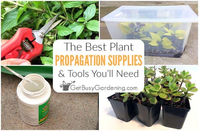Les meilleurs outils, équipements et fournitures de multiplication végétale