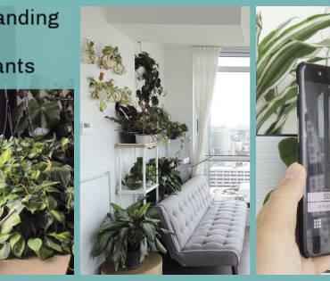 understanding-light-for-houseplants-FB.jpg