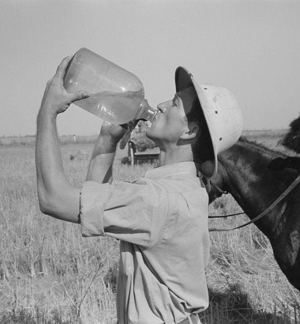 Une histoire de Switchel : boisson d'été à l'ancienne