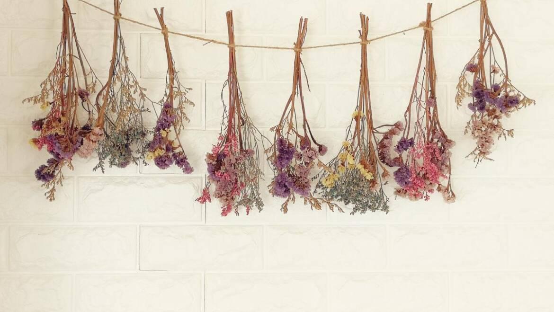 Comment sécher les fleurs |  Quelles sont les meilleures fleurs pour le séchage ?