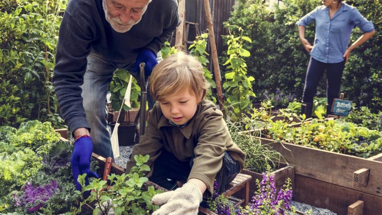 Jardiner avec les enfants : quoi planter et activités amusantes