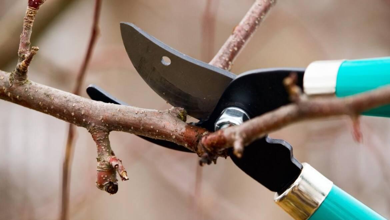 Quand tailler les arbres et les arbustes