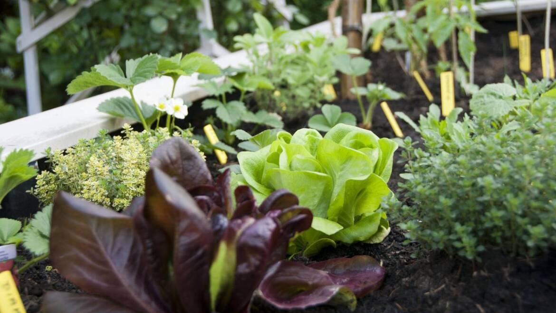 Tableau de jardinage de succession |  Les jardins de Laurent du vieux fermier